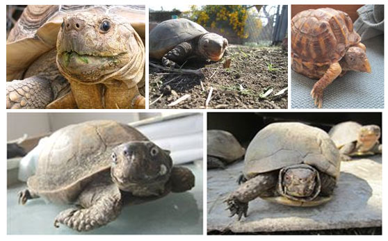 Blog on Sulcata Tortoise Hatchling and Mediterranean Tortoises